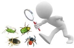 Monitoraggio insetti per Arezzo e provincia
